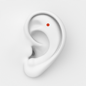 outer_conch